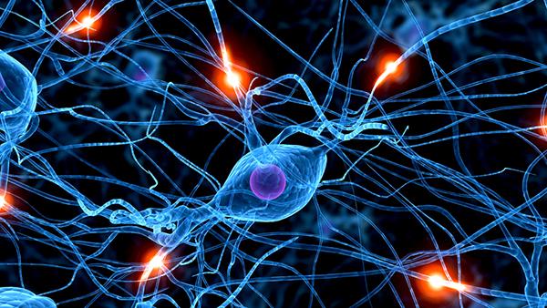 neurolearn