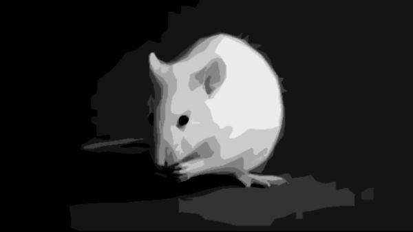 Essay  Origins Of The Cognitivebehavioural Model Biological  White Rat
