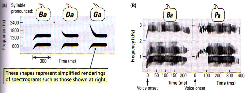 013 Speech Sounds.jpg