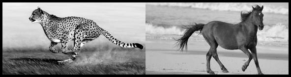 cheetahhorse