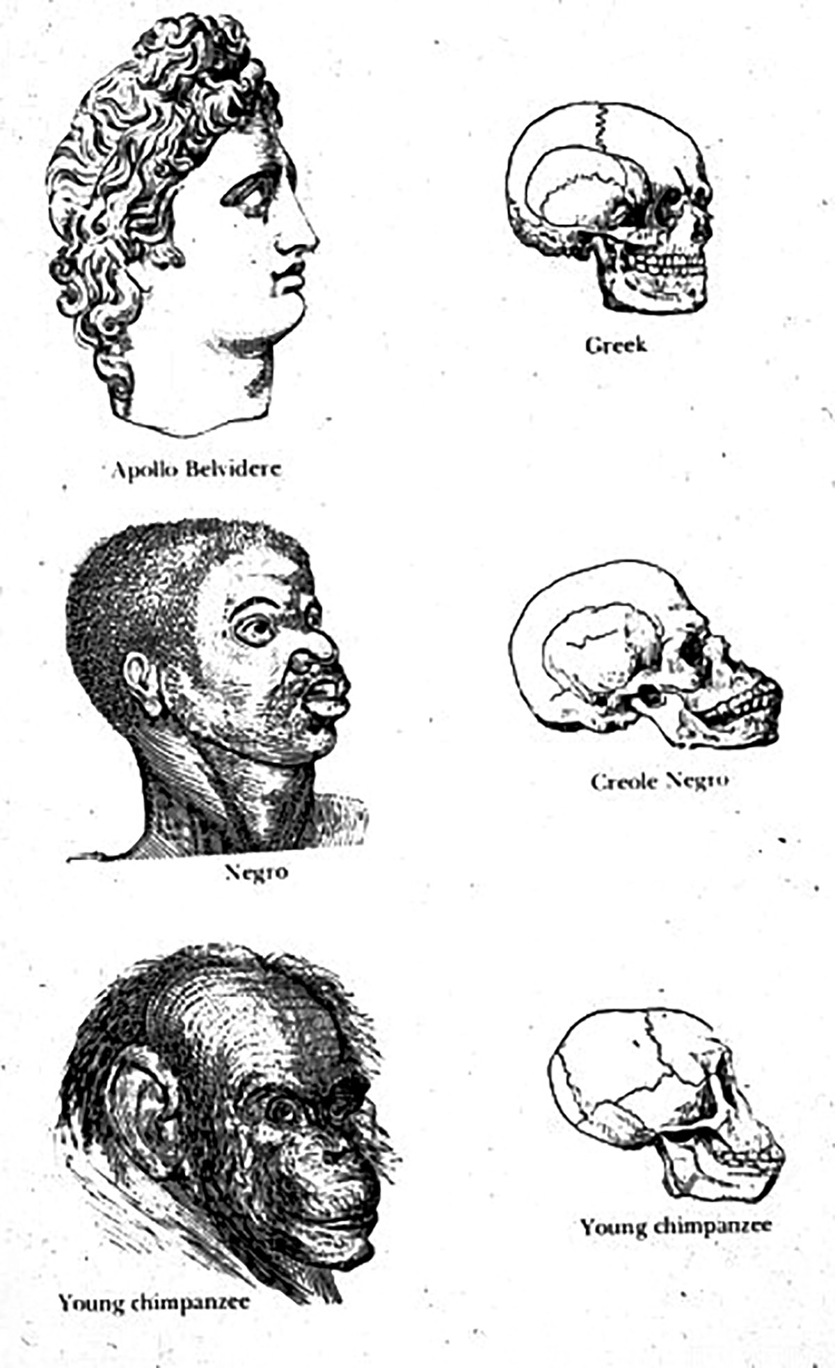 Types of Mankind (1854)