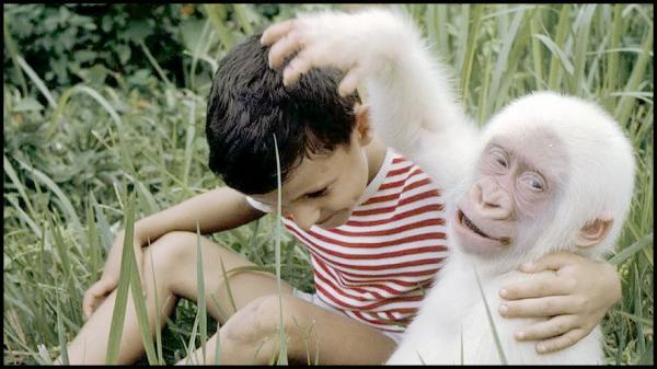 Bébé Gorille Albinos avec son ami d'purb dpurb site web