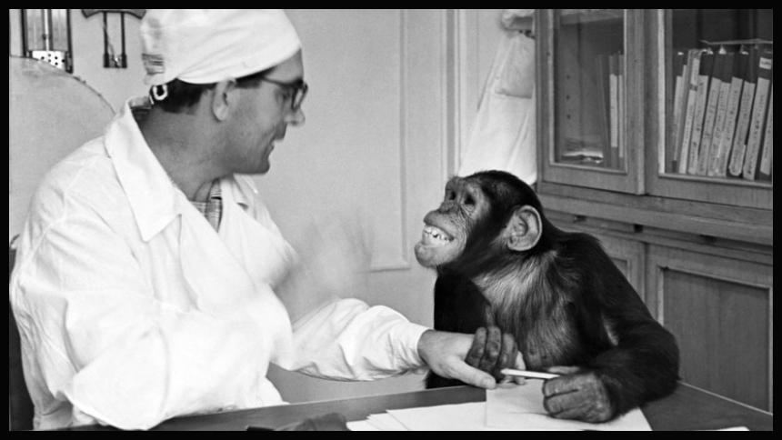 Ilya Ivanov, Human Sperm & Female Chimpanzees 1927