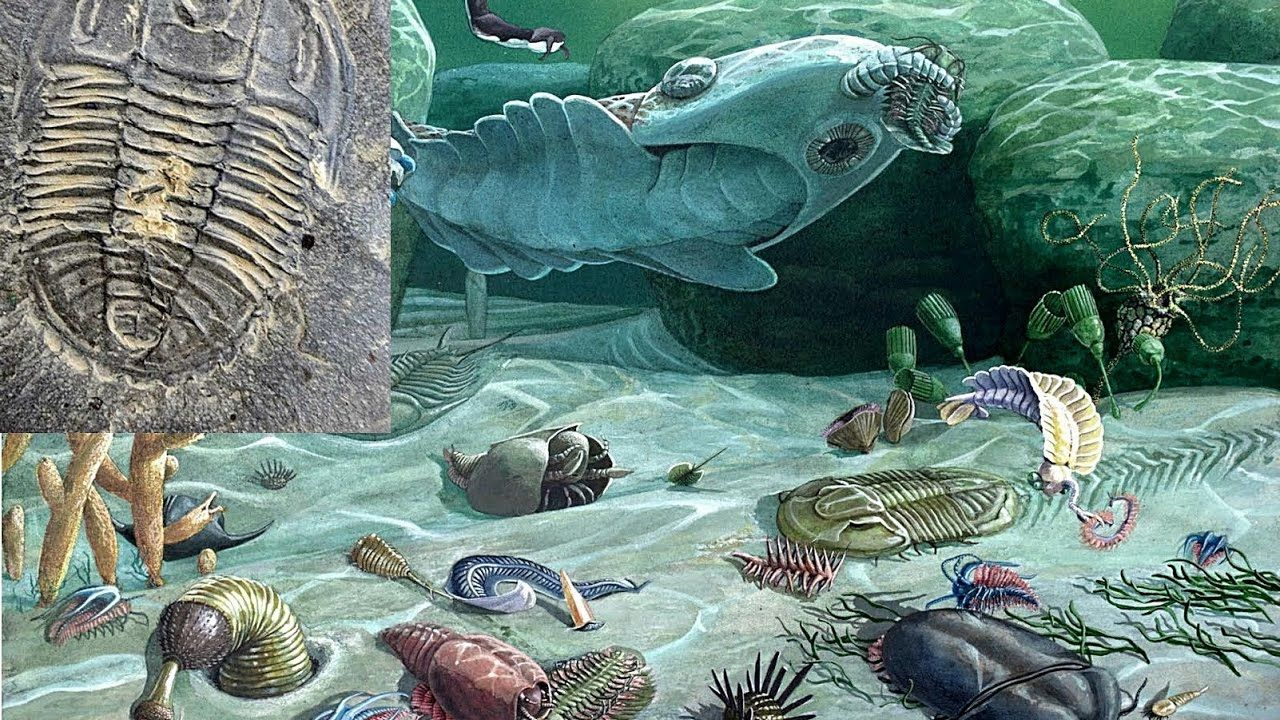 022 The Cambrian Explosion