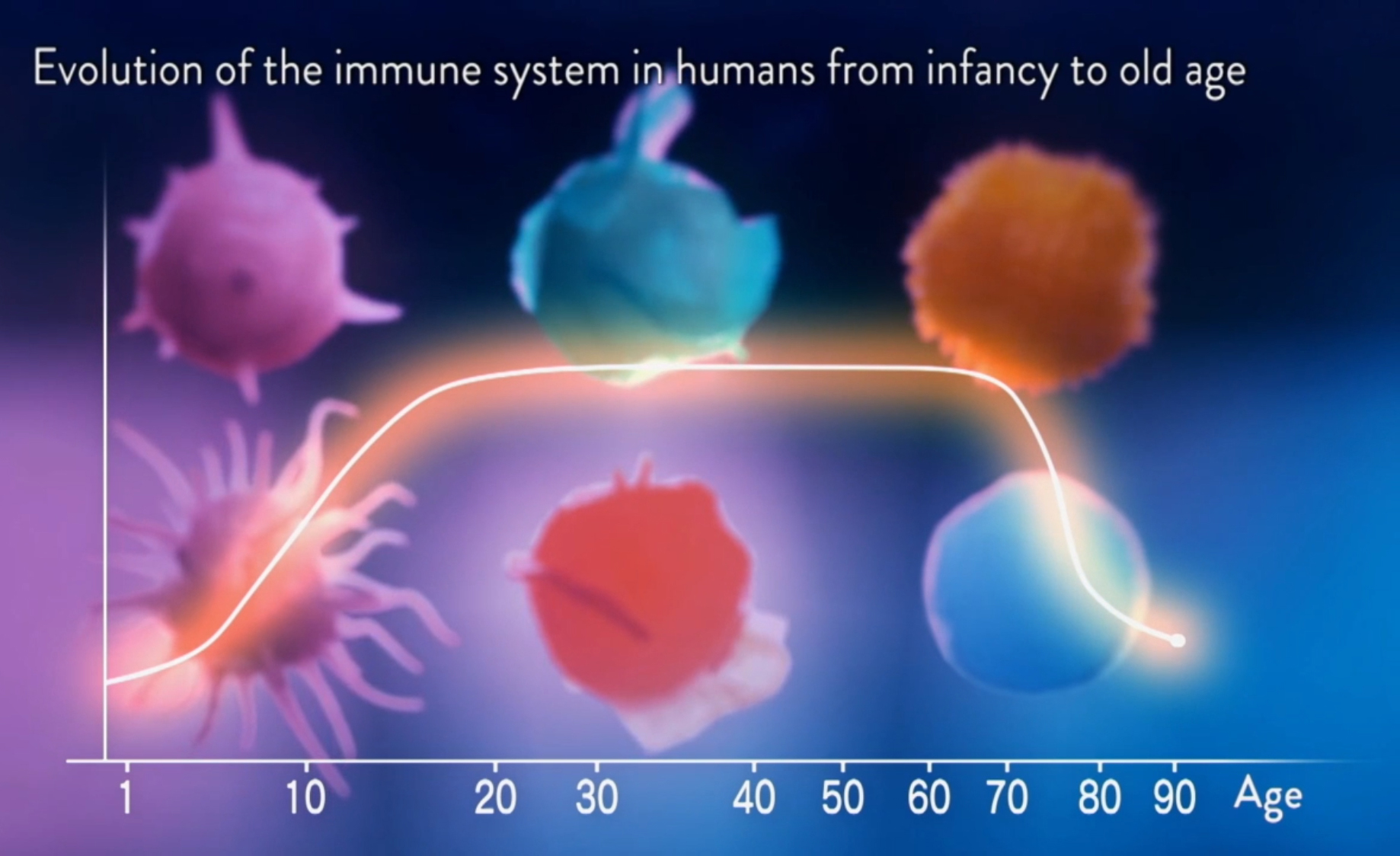 031 Evolution of immune system