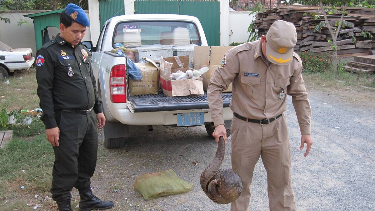 Wildlife Alliance Pangolin Rescue (South America)